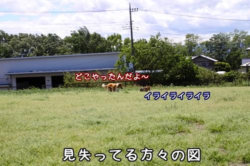 183_20100528194654.jpg