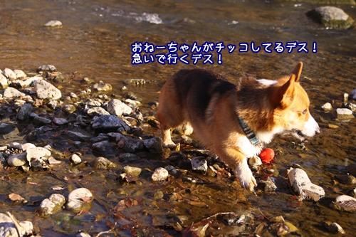 184_20100125111111.jpg