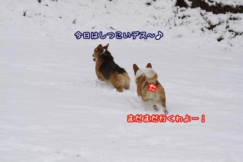 200_20100203104622.jpg