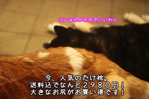 236_20100316115836.jpg