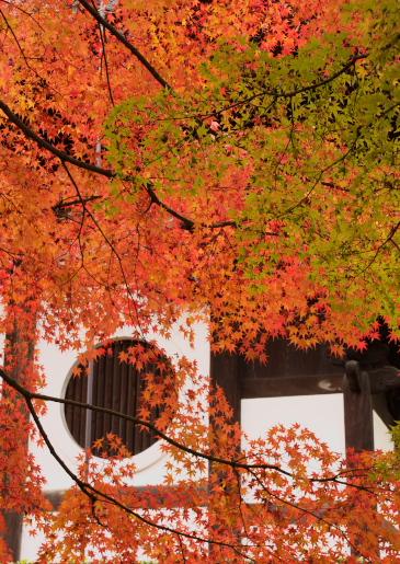東福寺ー6