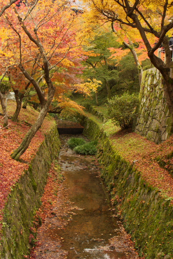 東福寺ー3
