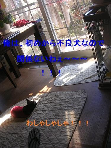 DSCN6377a.jpg