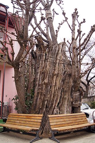 130303東京 光圓寺の銀杏①