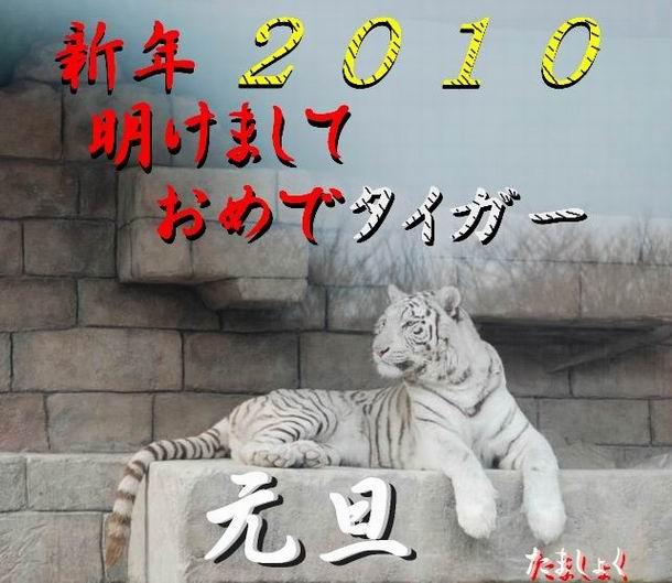 サイズ変更年賀状用(ホワイトタイガー)