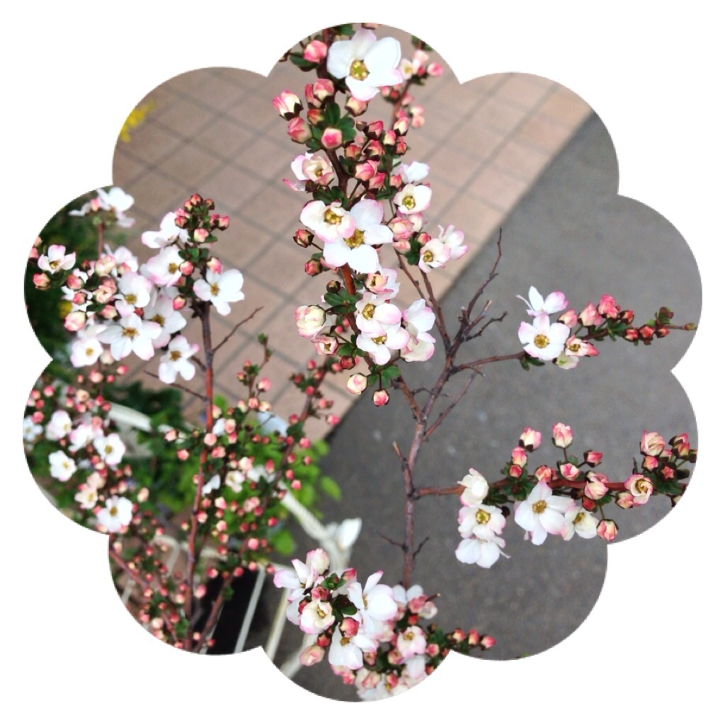 image_20130313200503.jpg