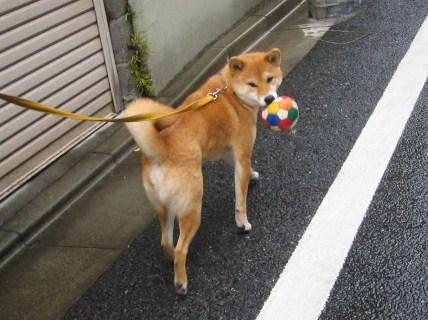 ball-again.jpg