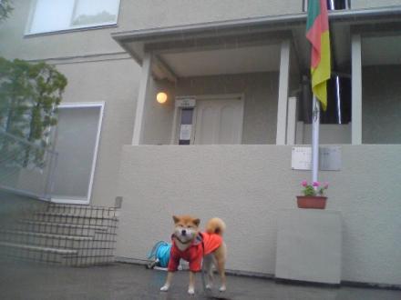 the-cameroon-embassy.jpg