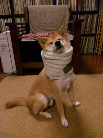 towel-collar.jpg