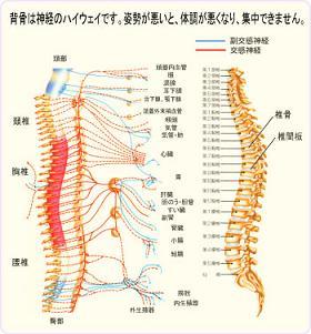 backbonechart350.jpg