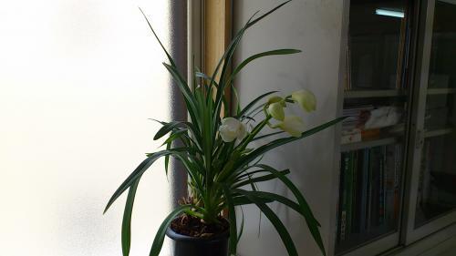 2.27花