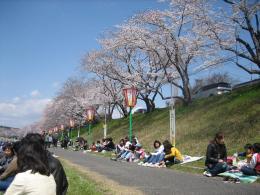 1045 桜1