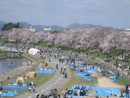 1045桜5
