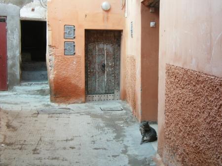 2912+gatto+02_convert_20100729084915.jpg