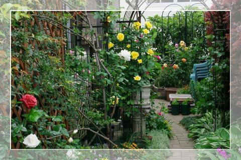 rosegarden 005