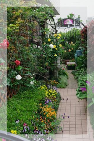rosegarden 002