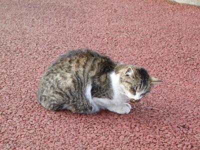 若林区役所前の猫