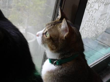 ガラス戸から外を見るちゃびー