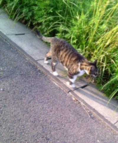 サンマリの猫