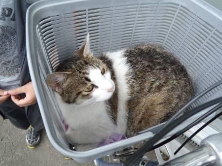 ブログ用若林3丁目レオパレス近くの猫 003