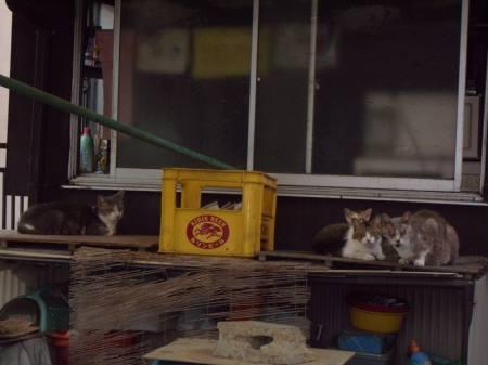 ブログ用-3若林3丁目レオパレス近くの猫 005