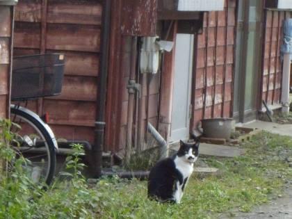 古城ローソン近くの猫 088