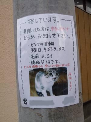 迷子猫電信柱-2