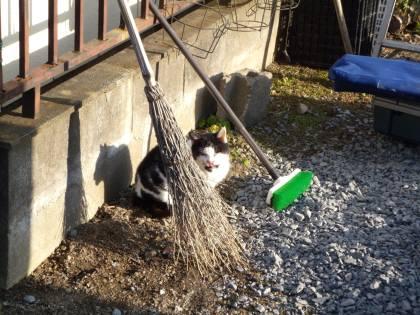 2010 11月24日 Yさん宅の外猫-ブログ-2 005