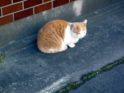 2010 11月24日 Yさん宅の外猫-ブログ-1 002