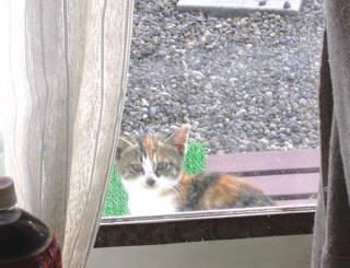 子猫、窓から 001