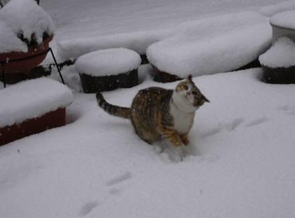 ちゃこの雪あそび-1 003