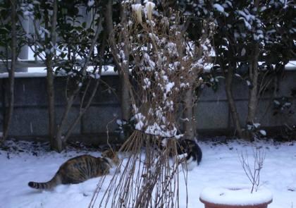 ちゃこの雪遊び-2 002