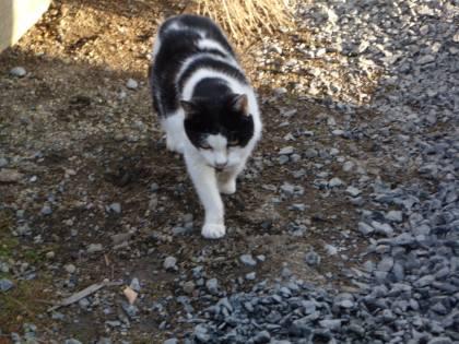 2010 11月24日 Yさん宅の外猫 -1006
