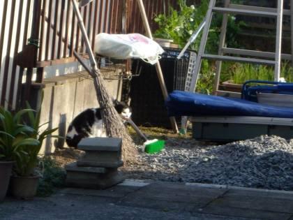 2010 11月24日 Yさん宅の外猫 -2003
