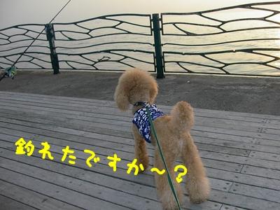 PICT1931ーつり