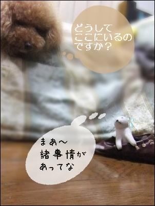 お父さん犬2