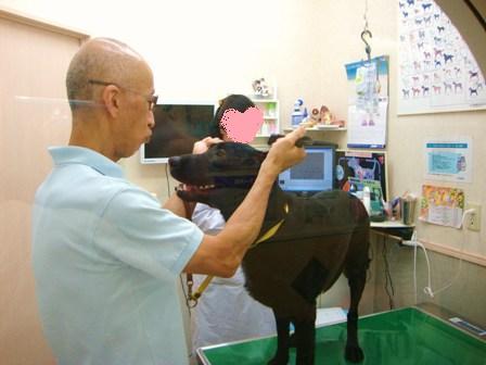 201007-動物病院 (5)