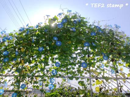 CA3G0493_20101017135714.jpg