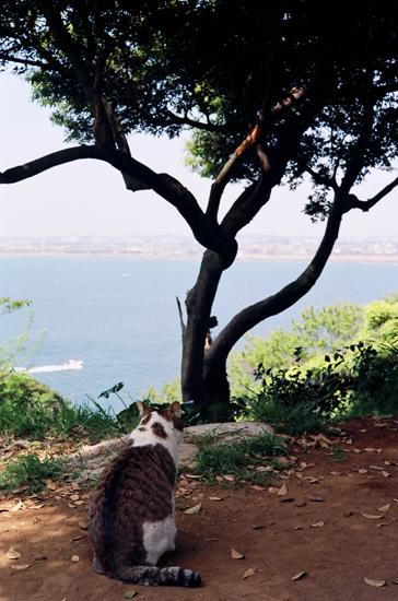 20100502江の島の猫su3