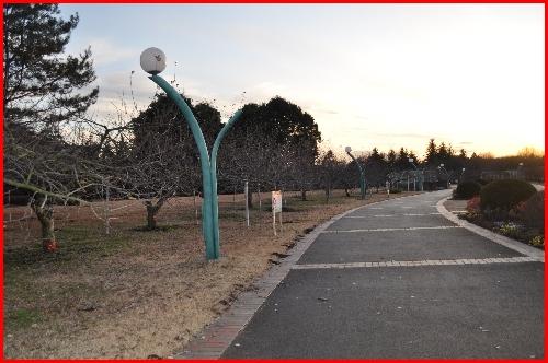 わんぱく公園27