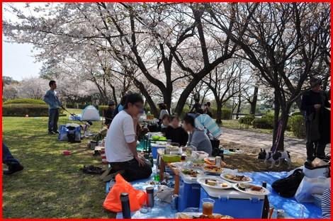 2010411お花見