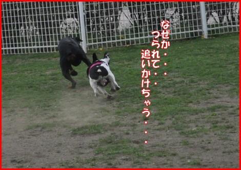 2010411-ラン10