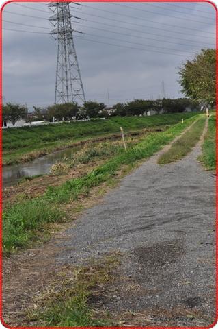 2010109-1.jpg
