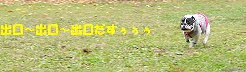 b3034ea70fa935262852-L.jpg