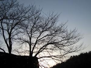 20100203.jpg