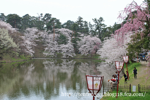 弘前桜2010-2_e