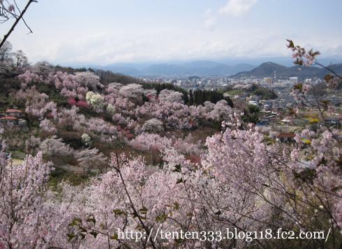 花見山(2)-6_e