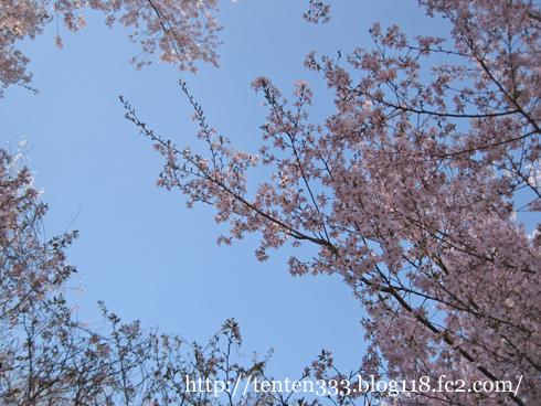花見山(2)-4_e