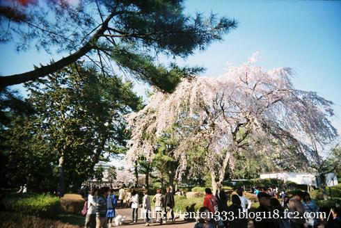 榴ヶ岡2011-8_e