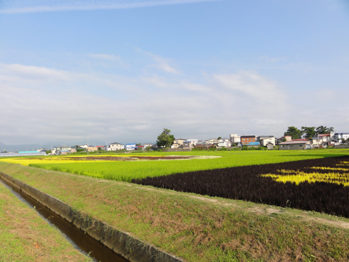 田舎館2011-5